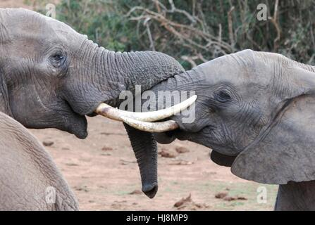 friendship, big, large, enormous, extreme, powerful, imposing, immense, - Stock Photo