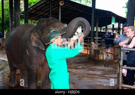 Orphaned baby elephant being feed with milk at Pinnawala elephant orphanage, Sri Lanka - Stock Photo