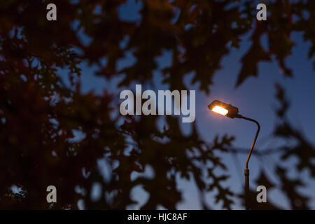 Lit street light amongst silhouetted foliage against blue sky at dusk - Stock Photo