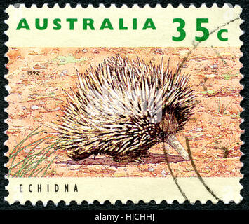 AUSTRALIA - CIRCA 1992: A used postage stamp from Australia, depicting an image of an Ehidna, circa 1992. - Stock Photo