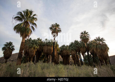 thousand palms online dating California highway patrol, riverside:  the following was presented to the riverside county grand jury and certified by the coroner:  thousand palms, 92276 .