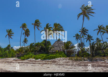 Abandoned and empty beach resort with green palms in wind and blue sky, no clouds, October 2016, Matemwe, Zanzibar, - Stock Photo
