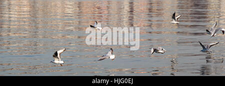 Seagulls are flying in sky over the sea waters - Stock Photo