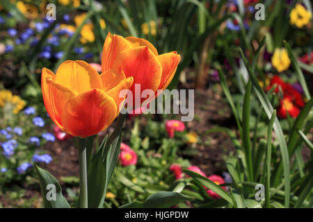 flower flowers - Stock Photo