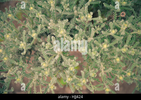 Natural background. Closeup of steppe autumn grass toned in green and blue colors - Stock Photo
