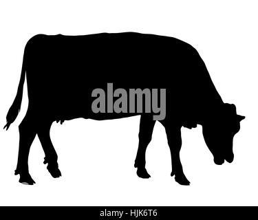 Weidende Kuh - Stock Photo