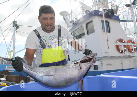 Spain. 24th Jan, 2017. Fishing tuna in the port of los cristianos Fishermen arrives with tuna fish in the port of - Stock Photo