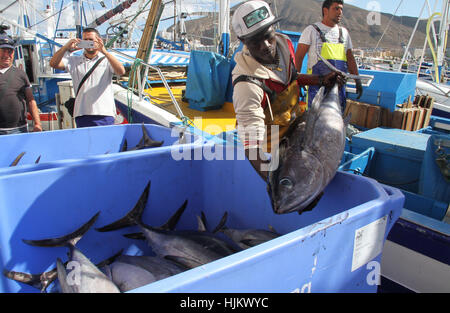 Spain. 24th Jan, 2017. Tuna fishing in the port of los cristianos. Fishermen arrives with tuna fish in the port - Stock Photo