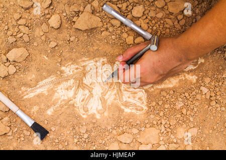 Skeleton and archaeological tools.Training for dig fossil.Simulated same as real digging. - Stock Photo