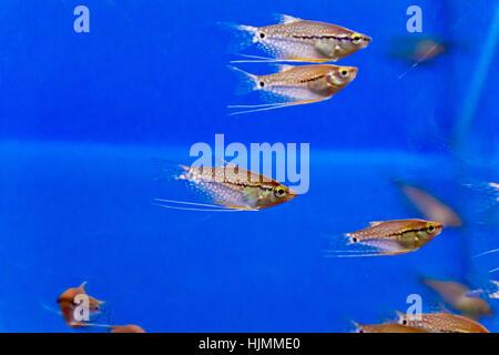 Photo of aquarium fishs in blue water - Stock Photo