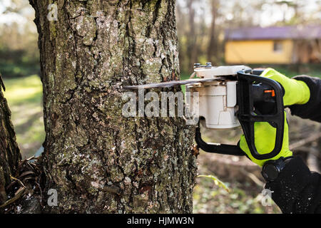 Hands of unrecognizable lumberjack with chainsaw cutting a tree. - Stock Photo