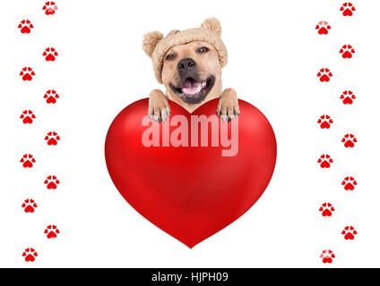 lovely cute dog with knitted hat hanging with paws on big valentine's day heart, isolated on white background - Stock Photo