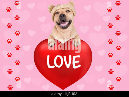 lovely cute dog hanging with paws on big valentine's day heart with text Love on pink background with hearts and - Stock Photo