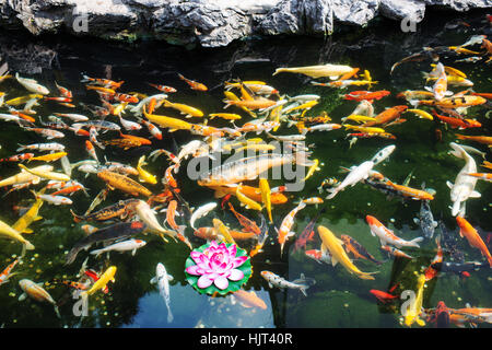 Koi pond at the jade buddha temple shanghai china asia for The koy pond