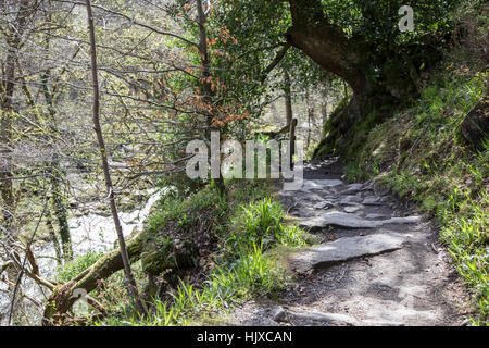Woodland path at The Strid, at Bolton Abbey, Yorkshire Dales, UK - Stock Photo