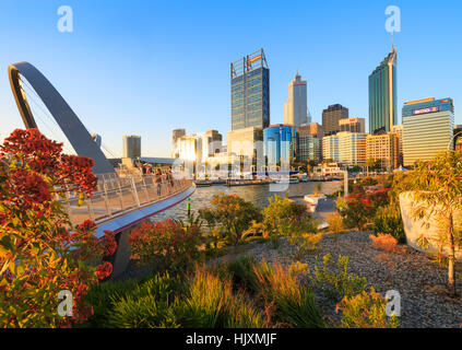 Native plants growing at Elizabeth Quay. - Stock Photo