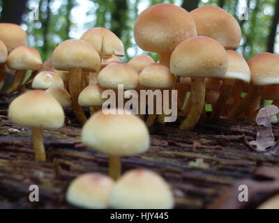 hike, go hiking, ramble, mushrooms, scenery, countryside, nature, forest, - Stock Photo