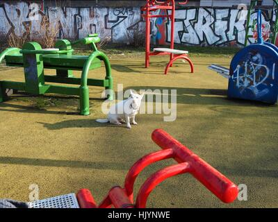 A dog sits on a playground fpr children in Berlin pictured on February 07, 2016. This photo is part of a series - Stock Photo