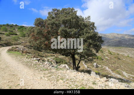Mountain path in carboniferous limestone landscape, near Benimaurell, Vall de Laguar, Marina Alta, Alicante province, - Stock Photo
