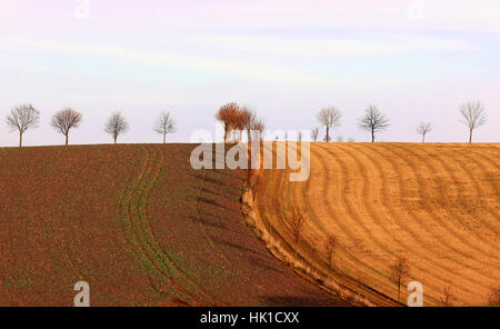 tree, trees, sunset, fields, acre, setting sun, scenery, countryside, nature, - Stock Photo