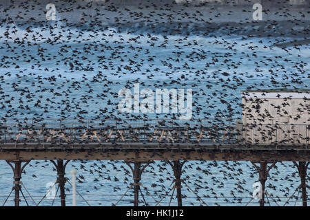 Aberystwyth, Ceredigion, Wales, UK. 25th Jan, 2017. UK Weather: Starlings swooping around Aberystwyth before roosting - Stock Photo