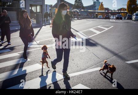Street scene, in Omotesando Avenue, Tokyo, Japan - Stock Photo