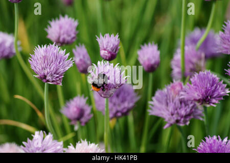 macro, close-up, macro admission, close up view, closeup, animal, insect, - Stock Photo