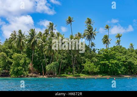 Palm beach on Raiatea, French Polynesia, South Pacific, Oceania - Stock Photo