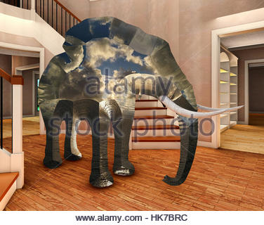 Elephant In The Room; Elephant In The Living Room 3d Rendering   Stock Photo Part 66