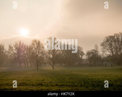 Trees silloutted by the early morning sun rise on a cold frosty morning in a park in Manchester - Stock Photo