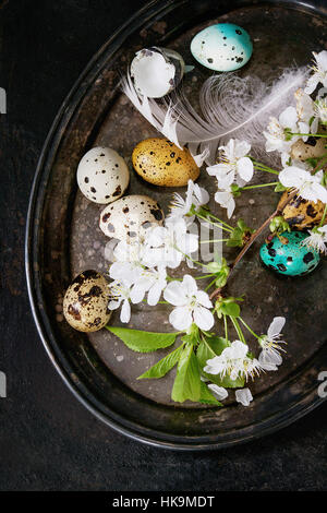 Decor colorful Easter quail eggs with spring cherry flowers, moss and bird feather on vintage metal tray over black - Stock Photo