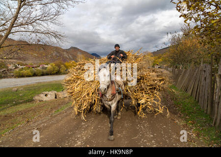 Farmer carrying dried corn leaves on a horse drawn cart in Georgia - Stock Photo