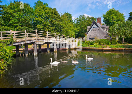 Bridge Cottage at Flatford Mill, Suffolk UK. Swans in foreground on river. - Stock Photo