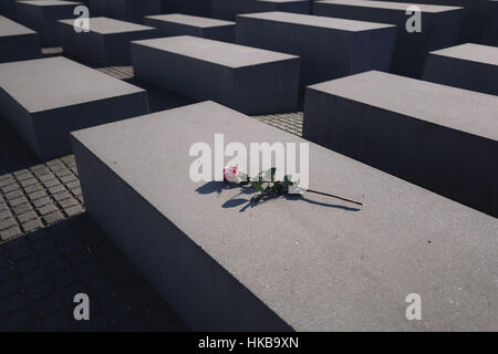 Berlin, Berlin, Germany. 27th Jan, 2017. A red rose is placed on one of the blocks of the Memorial to the Murdered - Stock Photo