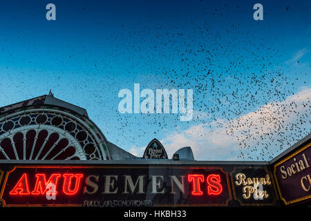 Aberystwyth Wales UK, Saturday   28 January 2017   UK Weather: Starling Murmurations  over the broken amusement - Stock Photo