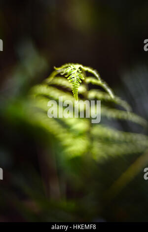 Detail of a tree fern leaf in submontane tropical forest. © Reynold Sumayku - Stock Photo