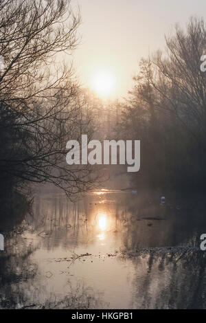 Winter sunlight shines through trees across a foggy lake - Stock Photo