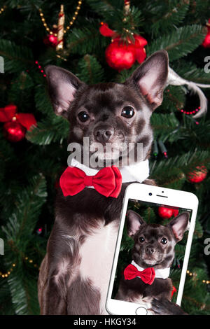 Dog make selfie - Stock Photo