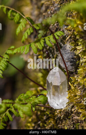 Clear Quartz crystal found among moss and ferns in forest at Great Serpent Mound in Adams County, Ohio, USA - Stock Photo