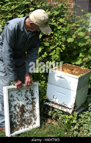 Bee keeper working at the bee hive - Stock Photo