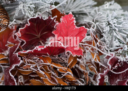 Hoarfrost covers holiday decorations on a wreath, Christmas season; Minnesota, United States of America - Stock Photo