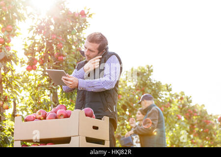 Male farmer with digital tablet talking on cell phone in sunny apple orchard - Stock Photo