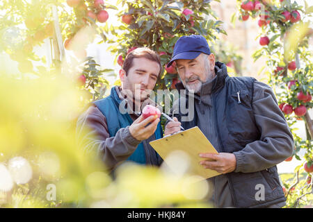 Male farmers with clipboard examining red apple in orchard - Stock Photo
