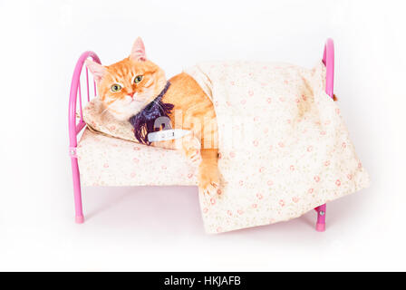 Red cat lying in bed with a thermometer. The concept of veterinary and animal health. Studio shot. - Stock Photo