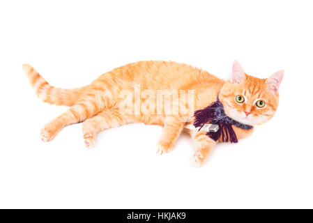 Red cat lying with a thermometer. The concept of veterinary and animal health. Studio shot. - Stock Photo