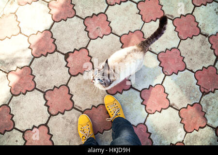 Thai cat and girl feet in yellow shoes top view. Siamese point color cat meowing upper view. Hungry pet asking for - Stock Photo