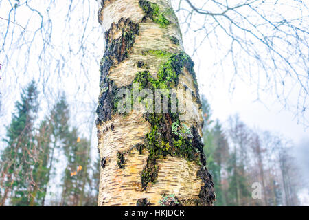 Moss on a tree trunk - Stock Photo