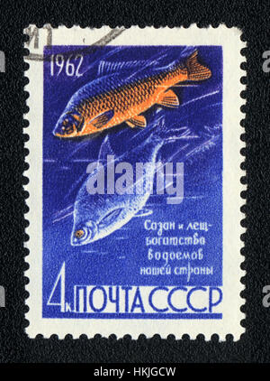 USSR - CIRCA 1962: A Stamp printed in USSR shows a  Common carp and Common bream (Cyprinus carpio and Abramis brama), - Stock Photo