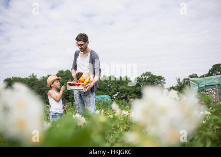 Mid adult man with his son harvesting vegetables in community garden, Bavaria, Germany - Stock Photo