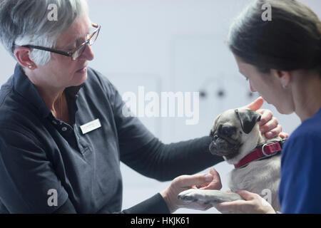 Veterinarians doing a check-up on a dog,Breisach,Baden-Württemberg,Germany - Stock Photo